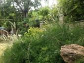 Landscape Front Area
